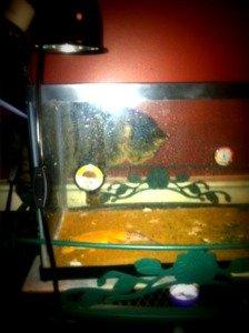 ella-gecko