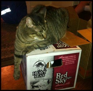 kitty-beer