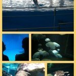 Tourists in our own town: National Aquarium