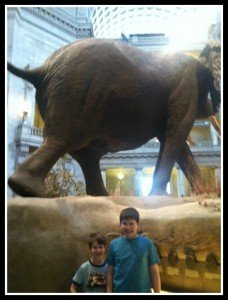 Tourists in our own town: National Museum of Natural History